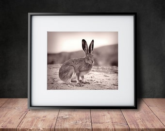 Vintage Jack Rabbit - Vintage Photograph Reproduction from 1930's  - Sepia and Black & White Photograph