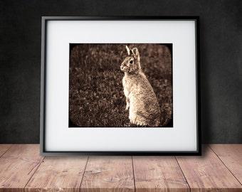 Woodland Bunny Photograph - Mademoiselle Lapina - Sepia Toned Photograph
