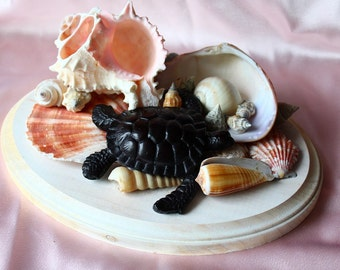 Handmade Nautical Shell Turtle Display Piece