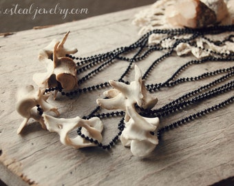 Raccoon Vertebrae -  Simple statement piece, macabre, oddity, ball chain