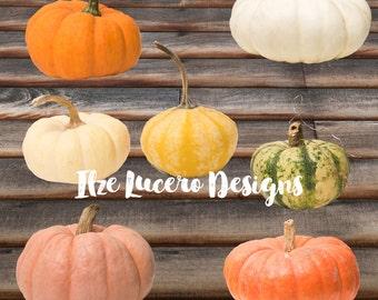 Pumpkin clip art PNG Fall Thanksgiving photo , overlays, digital embellishments, digital props