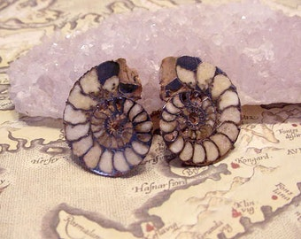 Fossil Ammonite cabs Matched Pair, Sliced Highly polished, Wire Wrapping, Jewelry Supply 11tu321 E