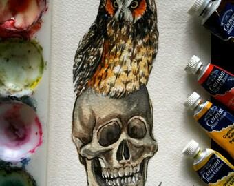 Owl , Skull Watercolor - Original Watercolor