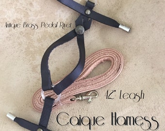 Caique Bird Harness XL Leash and Case
