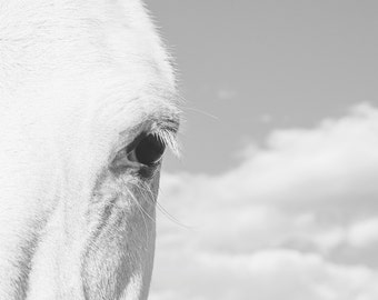 Horse Eye Photograph, Close Up White Horse