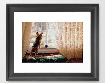 Wall Decor Photograph Yorkie Yorkshire Terrier