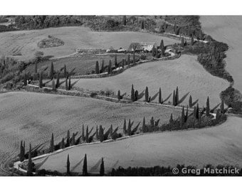 Fine Art Black & White Landscape Photography of Winding Lane Lined with Cypress Trees in Tuscany