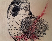 Original Falcon  Ink Drawing on tea stained paper - 6x8 inches hand drawn ink illustration bird of prey hawk raptor falconry art