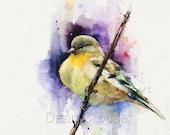 GOLDFINCH Watercolor Bird Print by Dean Crouser