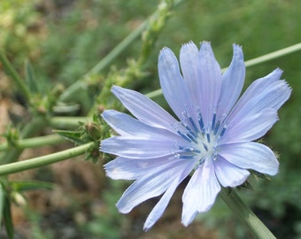Fine Art Photography on Gloss Photo Paper Soft Chicory