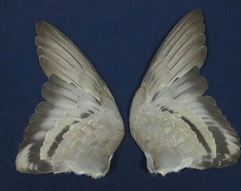 Pair Gray Barred Rock Dove Pigeon Dried Birds Wings Feathers Art Craft Taxidermy