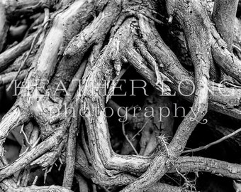Abstract Tree - Nature Photography, Wall Art Prints, Fine art photography print, Limited Edition