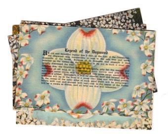 SALE 5 Vintage Legent of the Dogwood Unused Blank Postcards