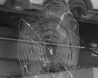 Black and White Spider Web in Summer Sun Adhered to Terra Cotta Roof Photograph