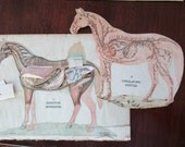 RARE original pages - 1800s color Manikin CHARTS from antique veterinary book - internal organs, horse