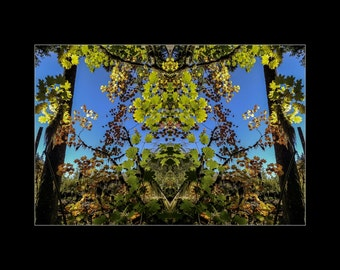 Mirror 1710 16x12_brilliant fall leaves_signed mirrored abstract photography_autumn forest_ Loree Harrell The Mirror Project_ready to ship