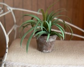 Spider plant dollhouse - miniatures