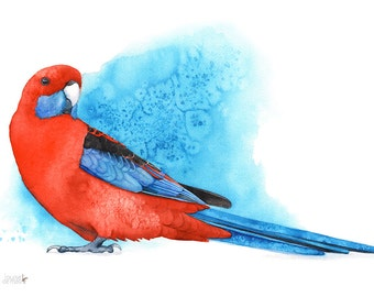 Crimson Rosella print, A4 size, CR13216, Crimson Rosella watercolour painting, rosella watercolor print, parrot watercolor