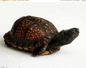 65% OFF Turtle Photography - Reptile Photograph - 8x10 Fine Art Photo Print