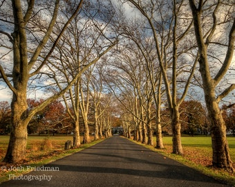 Late Autumn Road Through Trees, Landscape Photograph, Fonthill Castle Driveway in Fall, Fine Art Photography, Bucks County, Zen Decor, Path