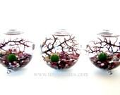 Marimo Terrarium: Marimo Moss Balls 3-Globe Aquarium, Several Different Colors Available