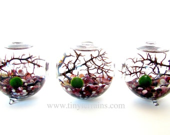 Marimo Terrarium: Marimo Moss Balls 3-Globe Aquarium, Several Different Colors Available