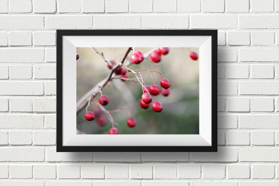 Nature photography, woodland winter scene, rustic wall art, red and green, tree branch print, Wild Red