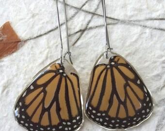 Real Monarch Wing Earrings on Stainless Steel Kidney Hooks.  Hypoallergenic jewelry.  Real Butterfly Earrings.  Monarch Jewelry