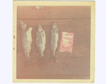 Faded FISH Social Realism Photography snapshot found photos vernacular photo