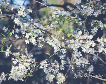 Flowers, Chokeberry Blossoms, Nature Photography, Glossy, Matted, 8x10, Fine Art Photography,Floral Photography