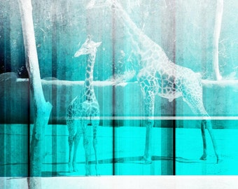 Giraffes in zoo. Canvas Print by Irena Orlov