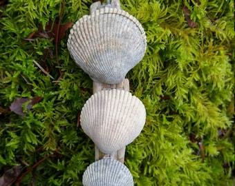 West Coast Driftwoo Art - Three Shells