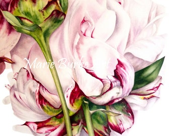 Botanical Art Print, Peony and Bud Fine Art, Large Botanical Flower Print, Watercolor Print, Botanical Illustration Peony Print, Watercolour