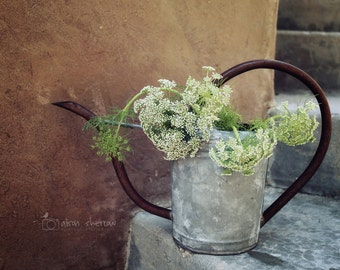 Queen Anne's Lace Photograph, French Country Decor, Rustic Farmhouse Art, Floral Art, Wildflower Botanical Print | 'From The Queen's Garden'