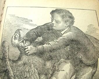 Antique Illustration - Antique Print - Bird Illustration - Antique Ephemera - Vintage Ephemera - Victorian - Signed FR