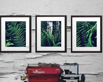 Set of 3 Prints, Fern Art, Botanical Print Set, Fern Wall Art, Kitchen Decor, Retro Kitchen Art, Botanical Poster