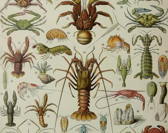 1900 Antique lithograph of SEA LIFE: CRUSTACEANS. Crabs. Lobsters. Crustacean. Marine animals. Natural History. 117 years old print.