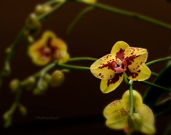 Yellow & Red Orchid, Flower photography, Nature photography, Metallic Paper, Vivid Metal, Metal Print, 5x7, 8x12, 16x24, 24x36