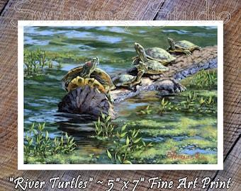 Wildlife Print - 5 x 7 Print - River Turtles -  Animal Art - River Turtles - Turtle Prints
