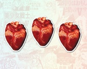 Anatomical Heart Set of 3 Stickers