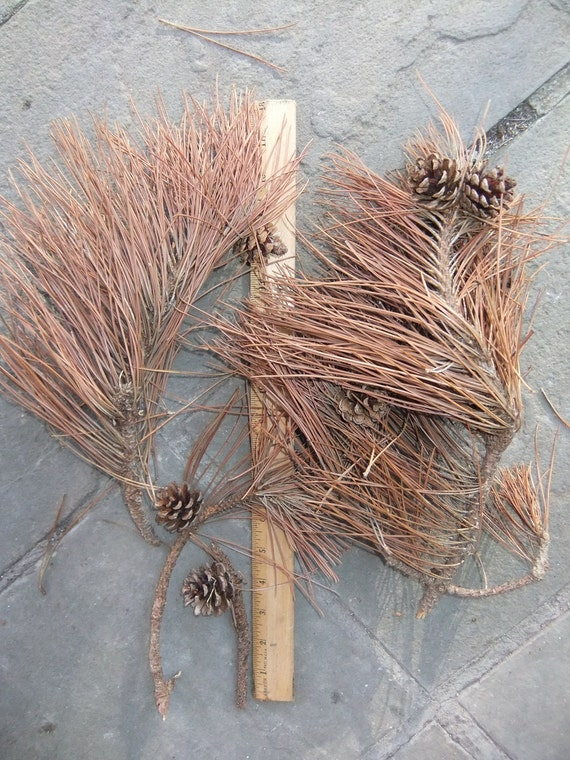 Basket Weaving Supplies Nyc : Real pine cones and twigs with needles