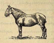 Suffolk Mare Horse Image Digital Graphic Illustration Download Printable Antique Clip Art Jpg Png Eps 18x18 HQ 300dpi No.3462
