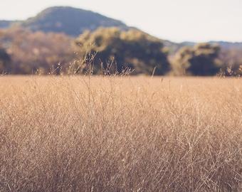 texas photography, texas landscape, rustic decor, landscape photography, texas hill country, texas decor, rustic photography, golden field