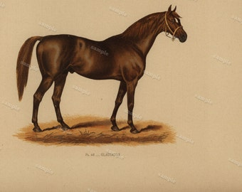 1890 0riginal Antique Natural History Chromolithograph of a horse Gladiator Animal Print-  Nature print  Very Rare