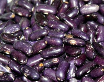 Koronis Purple Bush Bean, rare heirloom seeds