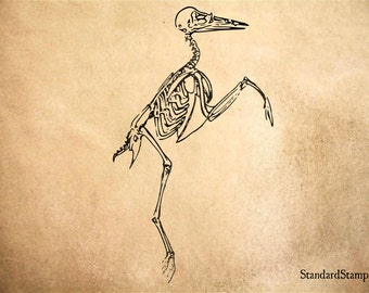 Bird Skeleton Profile Rubber Stamp - 2 x 3 inches