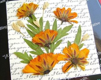 Orange pressed flower magnet, Orange brite lites cosmos, Square shape, Botanical magnet, Real dried flowers, Clear acrylic, Fridge magnet