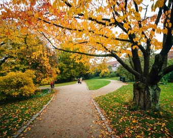Autumn color along a walkway at Botanisk Have, in Copenhagen, Denmark. | Photo Print, Stretched Canvas, or Metal Print.
