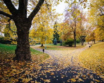 Autumn color and walkway at Letná Park, in Prague, Czech Republic - Photography Fine Art Print or Wrapped Canvas