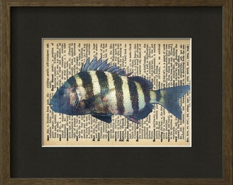 """Sheepshead Fish Print on Dictionary Coffee Stained Paper 11""""x8.5"""" Fits Standard Frames Fish Art Print, Fish Print, Dictionary Page Book Art"""